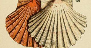 La poesia perduta della trasformazione – di Marco Ermentini