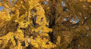 Foliage– di Marco Ermentini